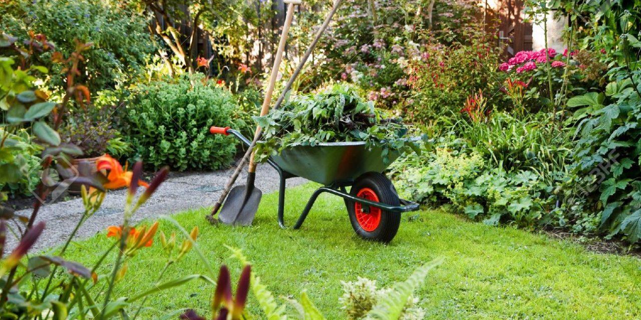 Tuinonderhoud: Alles over het onderhouden van je tuin