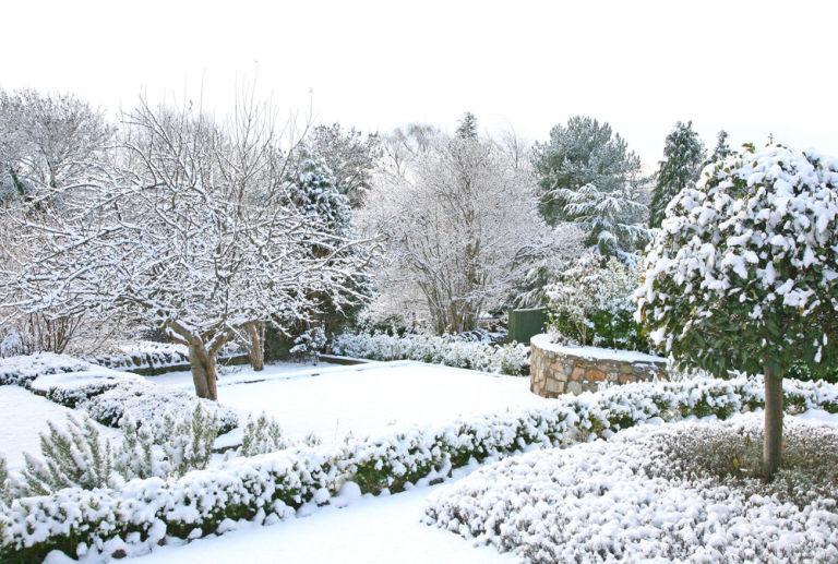 Hoe je tuin winterklaar maken?